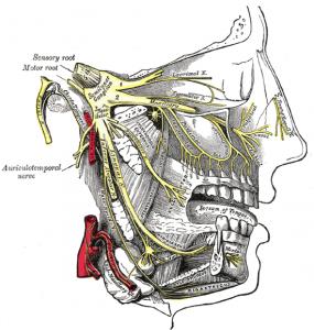 de trigeminus is betrokken bij migraine