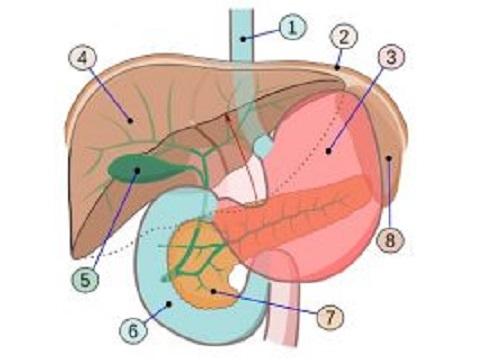 Hoofdpijn en galblaas
