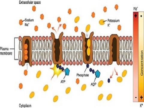 Hoofdpijn tekort elektrolyten